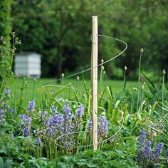 Plant support rings - Chestnut stake with wire hoops. Now these look great , easy to make and wouldn't stand out too much. Poppies, cornflowers, delphiniums etc! Garden Yard Ideas, Garden Art, Hothouse, Plant Supports, Garden Structures, Garden Inspiration, Gardening Tips, Make It Simple, Delphiniums
