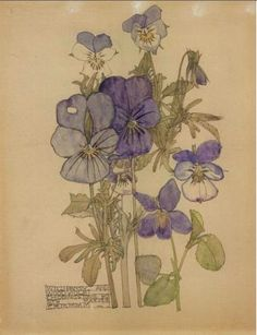 Plant Study ▫ Wild Pansy & Wood Violet / Chiddingstone by Charles Rennie Mackintosh (CRM) in collaboration with Margaret Macdonald Mackintosh (MMM) ▫ 1910