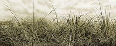 Fototapete Grassground (Nr. 14982)  www.berlintapete.de