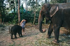 Ethical Elephant Experience in Thailand: The Chai Lai Orchid — Bon Traveler