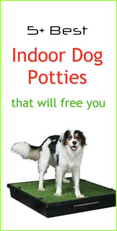 Indoor Dog Potties can be a great solution when taking the dog outside for a walk is not an easy option. Dog potties have come a long way in terms of features and there are lots of dog potty systems now available. Based on hours of research together with my own personal experiences, I think these pet toilets are the best indoor dog potties available in the market today and the ones I recommend you try.