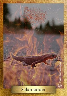 Salamander, found in many cultures, is a mythic being with supernatural powers, able to live in the presence of fire. He represents those who pass through the fires of passion & this world without stain – thereby standing for chastity, loyalty, impartiality, virginity, courage and the faithful  * One of the 48 cards in the EcoHeartOracle.com - this is a brief description and not the complete oracle meaning.