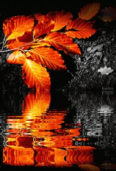 GIF of Autumn Leaves Reflection and Animated Water Movement- If you click on the full size pic, it shimmers...