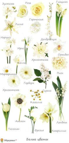 Белый свадебный букет невесты (Obradoval.ru) - фото 8-2