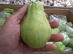 John from http://www.growingyourgreens.com visits Rorabeck's in Lake Worth Florida to check out their nursery and produce for sale.  He ends up purchasing some chayote squash that he will plant at his friends place here in South Florida.