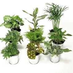 mini plante verte seau zinc
