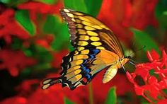 butterfly - Pesquisa Google