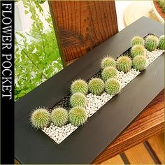 Plants Interior modern cacti-style a-5 (large amount of black)