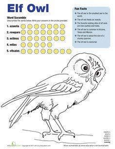 Elf Owl Facts