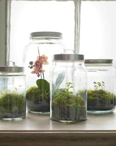 Woodland Terrarium tutorial from Martha Stewart. It may be gray outside, but it's always green in these moss terrariums. We used kitchen canisters, which are readily available and inexpensive; their tight-fitting lids capture the condensation the plants require to thrive.