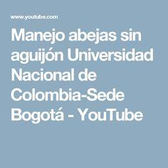 Manejo abejas sin aguijón Universidad Nacional de Colombia-Sede Bogotá - YouTube