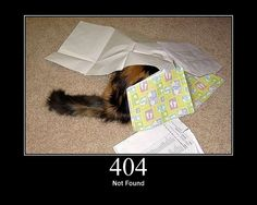http status cats: 404 - Not found. (Images from GirlieMac) Funny Animal Pictures, Best Funny Pictures, Funny Cats, Funny Animals, Funniest Animals, Status Code, You Can't See Me, 404 Page, Cat Food