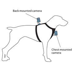 Kurgo Dog Products - Tru-Fit Smart Harness with Camera Mount, $35.00 (FOR GO PRO) (http://www.kurgo.com/dog-harnesses/tru-fit-smart-harness-with-camera-mount/)