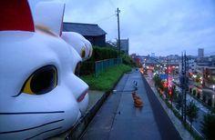 Manekineko in Tokonoma City Aichi, Japan  招き猫@愛知県常滑市
