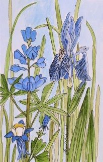 Iris larkspur and columbine are their names shining bright against the pale blue sky. A botanical garden flower landscape watercolor nature art illustration of blue and green flowers by Laurie Rohner.   Title: A Blue Garden Medium: Watercolor on Paper Paper Size: 5.5 x 8.5 inches Signature: Laurie Rohner on front, signed dated title en verso. Unframed.
