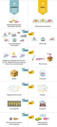 Why Fish | Future of Fish Infographic by designer Missy Chimovitz