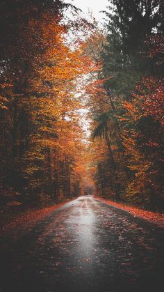 Wallpaper Iphone - Autumn road - - Wallpapers World Wallpaper Marvel, Fall Wallpaper, Nature Wallpaper, Wallpaper Backgrounds, Beautiful Wallpaper, Forest Wallpaper, Phone Wallpapers, Autumn Photography, Landscape Photography