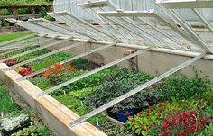 Cold Frame | Ultimate Guide To Have An Indoor Garden For Winter | [Infographic]