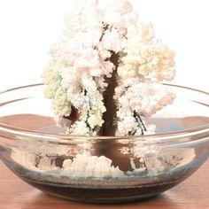 Magic Crystal Tree