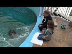 Must Watch: Adorable interaction between Nicholas the dolphin and a young boy with Leukemia.