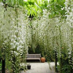 Hanging flowers in the garden and a bench to admire them. White wisteria - is it even better than the purple? Moon Garden, Dream Garden, Beautiful Gardens, Beautiful Flowers, Magical Gardens, Beautiful Beautiful, White Wisteria, Wisteria Garden, Wisteria Pergola