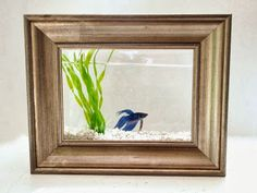 A cool DIY fish tank idea.