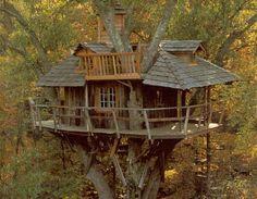 Una Casa sull'Albero?