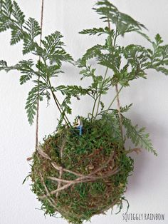 Hare's Foot Kokedama  Hanging Hill by squigglyrainbow on Etsy, $50.00