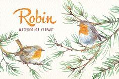 watercolor robin bird clipart - Illustrations - 1