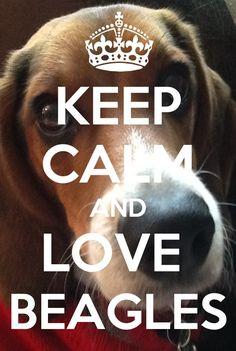 ❤❤❤ my beagle!!