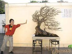 Bonsai / Penjing....windswept style