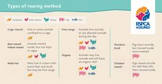 Do you know what the different rearing methods - such as barn reared and outdoor bred - you see on food packaging mean? Check out our infographic and become an expert!