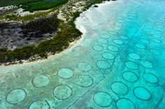 Mysterious underwater circles.