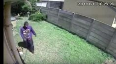 A burglar was caught on surveillance camera having an intense run-in with what you'd think is a vicious dog, but is actually a tiny Yorkshire Terrier. The clip Yorkshire Terrier Teacup, Yorkshire Terrier Haircut, Yorkshire Terrier Puppies, Strong Dog Names, Dog Attack, Running Away, Funny Dogs, Funny Pictures, Backyard