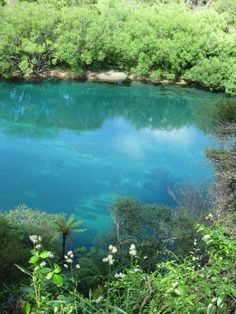 The exotic blue waters of the Waikato River, New Zealand