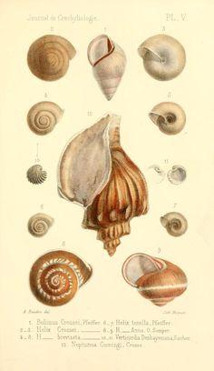 t 10 (1862) - Journal de conchyliologie. - Biodiversity Heritage Library