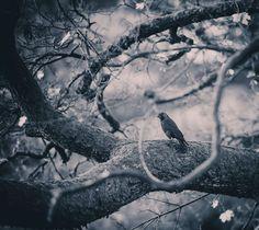 #bird #birds #branch #branches #tree #tree branch