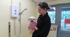 Dogs Trust Manchester is offering to wash mucky mutts to help raise pounds for the homeless hounds in its care.  Whether it's a Bichon Frise or a Saint Bernard, a West Highland Terrier or a Weimaraner, they will be washed and towel dried by Canine Carers in the rehoming centre's Canine grooming parlour. The 'Scruffy to Fluffy' event will be held from 10am-4pm on Saturday 15 April.  There's no need to book. All money raised will go to help care for the dogs whilst they wait for their forever…