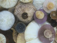 Photographic Print: Mushroom Cap Assortment Showing their Gills by Gary Meszaros : Stuffed Mushroom Caps, Stuffed Mushrooms, Mood Images, Budget Fashion, High Resolution Photos, Cool Posters, Prints For Sale, Mini Cupcakes, Fungi