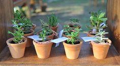 As lembrancinhas do casamento foram mudinhas de plantas, bem em clima de fazenda