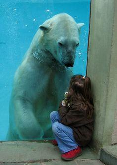 I love polar bears.
