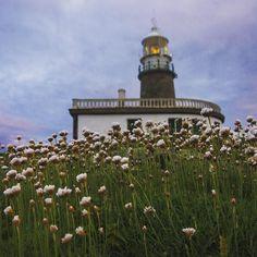 Esplendor de primavera 18 de mayo de 2016  #Corrubedo #faro #lighthouse #flores #flowers #olladasmiñas #barbanza #barpequeno #naturaleza_galicia #calidadegalizaa #loves_galicia #nature #galiza #galicia #estaes_galicia #estaes_espania #total_galicia #todoes_galicia #foto_galicia #GALICIAVISUAL #primavera #spring #galiciameiga #galigrafias #somosgalegos by barpequeno