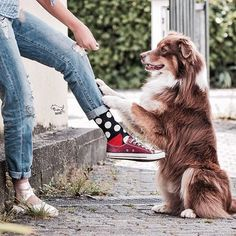 Happy Socks - Funky Colorful Socks For Men, Women & Kids. Fluffy Animals, Animals And Pets, Cute Animals, Cute Socks, Women's Socks, Liner Socks, Colorful Socks, Happy Socks, Animals Of The World