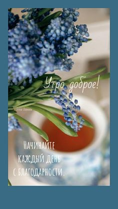 Morning Humor, Funny Morning, Good Morning, Plants, Buen Dia, Bonjour, Plant, Good Morning Wishes, Planets