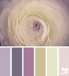 ranunculus tones #graphic_design #design #colour @N17DG
