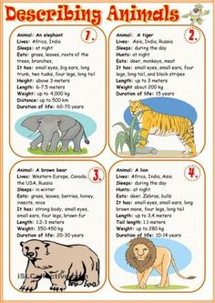 Describing animals 1