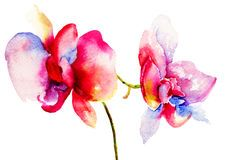 Pink orchids flowers Stock Photos
