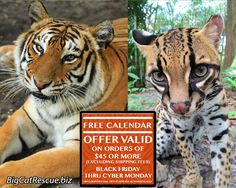 Black Friday thru Cyber Monday Offer: FREE Big Cat Calendar  Free calendar any totaling $45 or more (excluding shipping fees).   Offer valid 11/24 – 11/27. There is no coupon code for this offer.   The calendars will be shipped with qualifying orders. http://bigcatrescue.biz