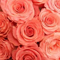 coralroses