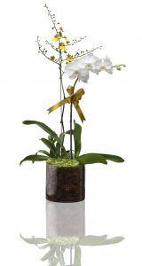 Jak přesazovat orchidej